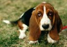 Что делать, если ваша собака потерялась?