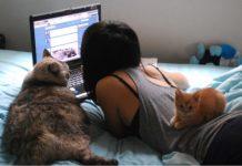 Сайты для кошатников: топовая десятка для тех, кто живет с котами