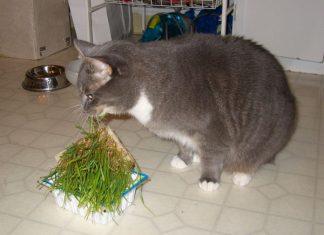 24 факта о кошках