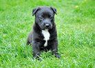 Как выбрать себе собаку: советы экспертов и кинологов