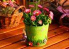 16 домашних цветов и растений, которые могут вызывать у вас аллергию