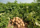 Когда вносить удобрения осенью: несколько полезных советов всем, у кого есть свои поля и участки