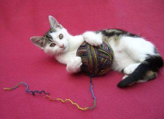 Посмотрите 15 игрушек для котов, которые можно сделать своими руками!