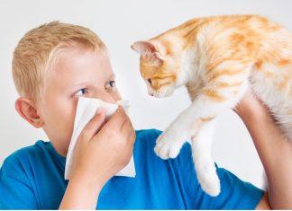 Узнайте, какого кота, собаку или другое животное завести при аллергии!