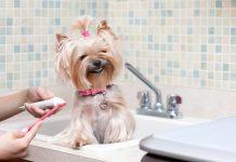 Как правильно чистить зубы собаке: основная информация для собачников